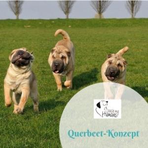 Ein Rundelhunde spielt im Gras. Link zum Kurs Das Querbeet Konzept