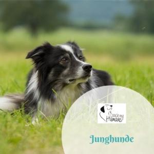 Ein Hund im Gras. Link zur Ausbildung Junghunde.